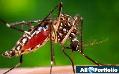 Dengue Chikungunya fever infromation